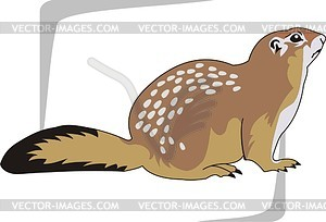 Gopher clipart #1, Download drawings