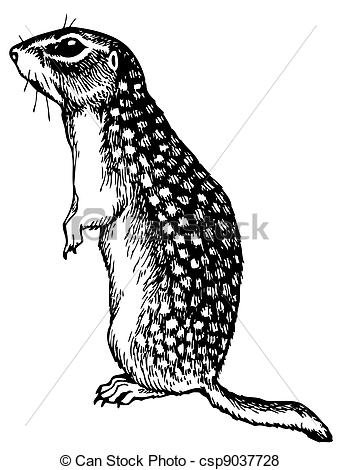Gopher clipart #6, Download drawings