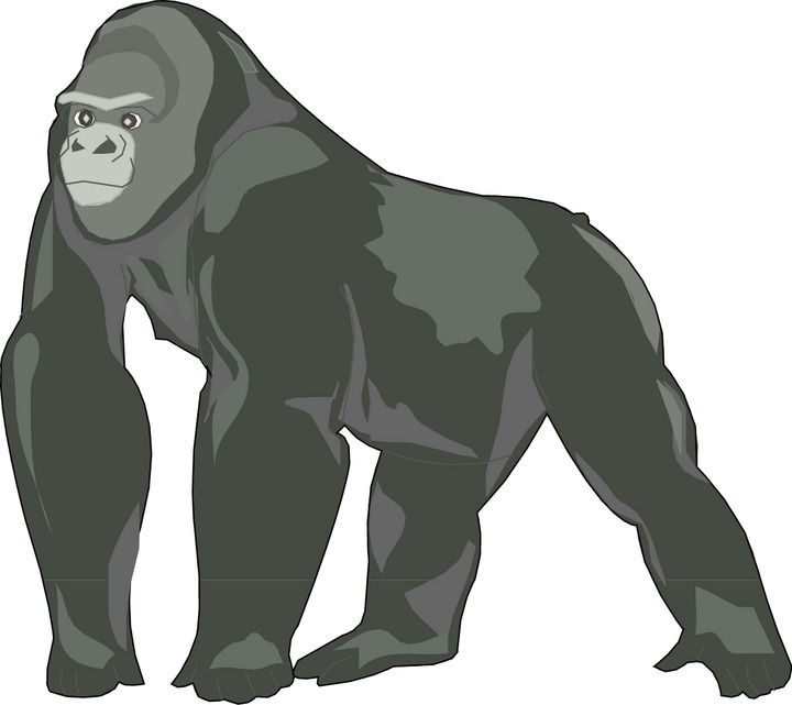 Gorilla clipart #3, Download drawings