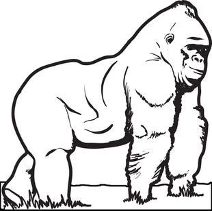 Gorilla coloring #15, Download drawings