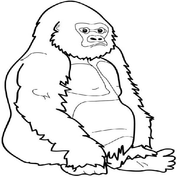 Gorilla coloring #2, Download drawings