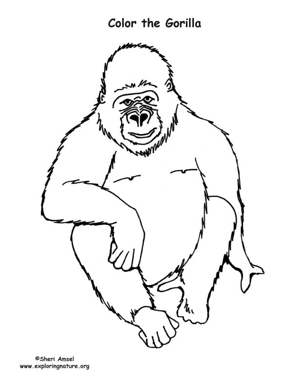 Gorilla coloring #3, Download drawings