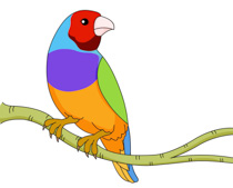 Gouldian Finches clipart #1, Download drawings