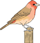 Gouldian Finches clipart #9, Download drawings
