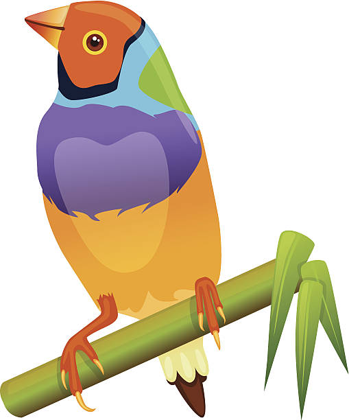 Gouldian Finches clipart #2, Download drawings