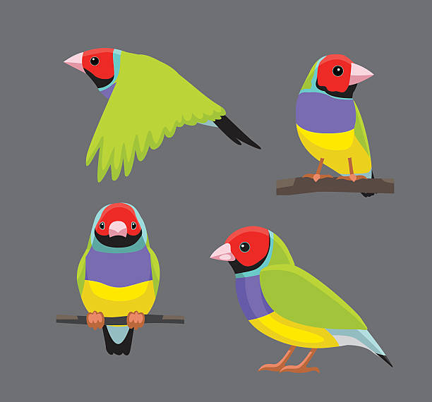 Gouldian Finches clipart #4, Download drawings