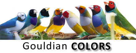 Gouldian Finch coloring #12, Download drawings