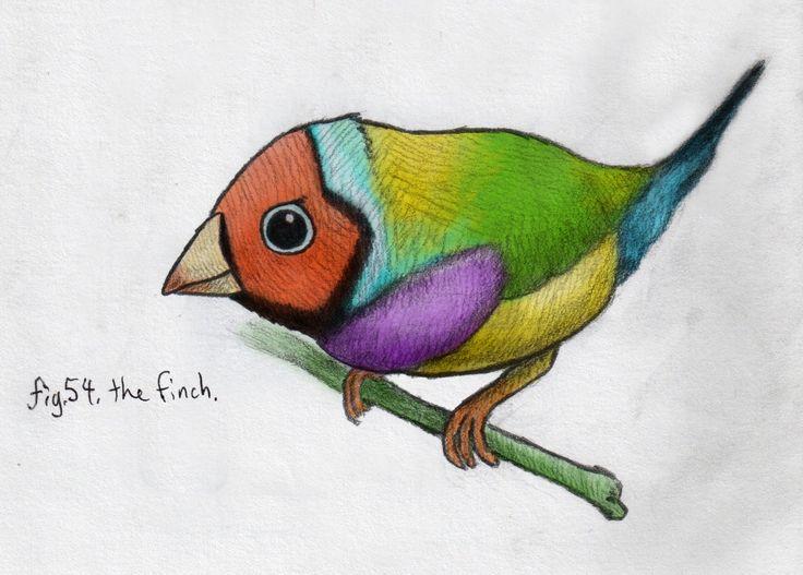 Gouldian Finch svg #7, Download drawings