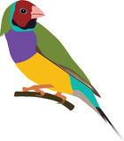 Gouldian Finches clipart #3, Download drawings