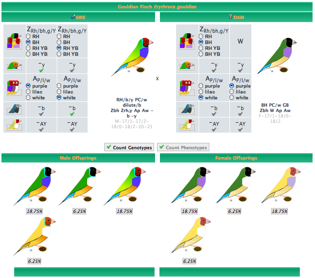 Gouldian Finches svg #13, Download drawings