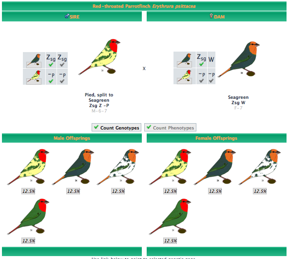 Gouldian Finches svg #11, Download drawings