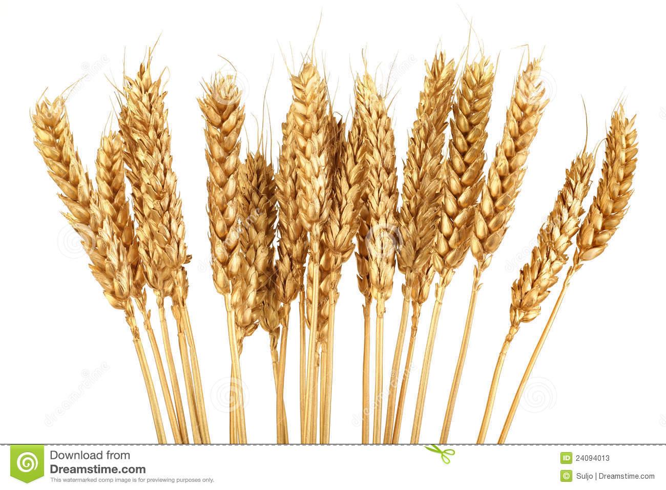 Grain clipart #2, Download drawings