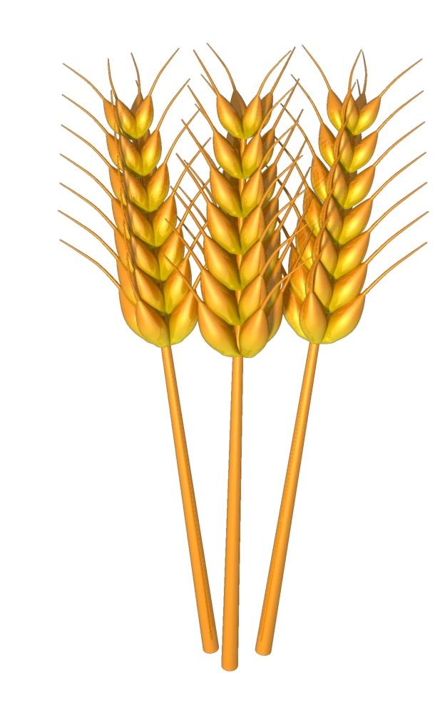 Grain clipart #15, Download drawings