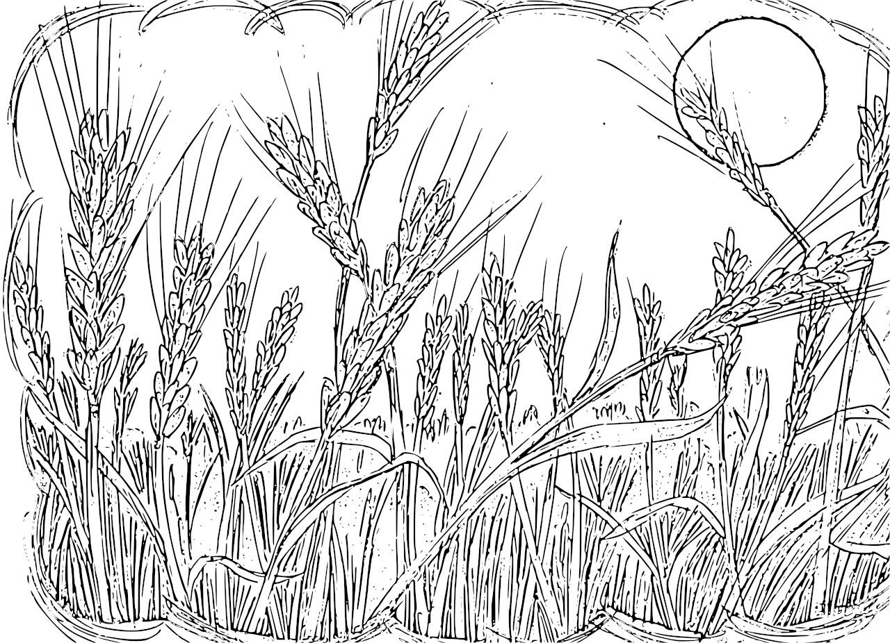Grain coloring #9, Download drawings
