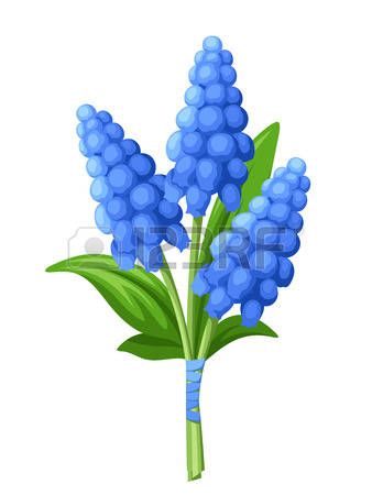 Grape Hyacinth clipart #11, Download drawings