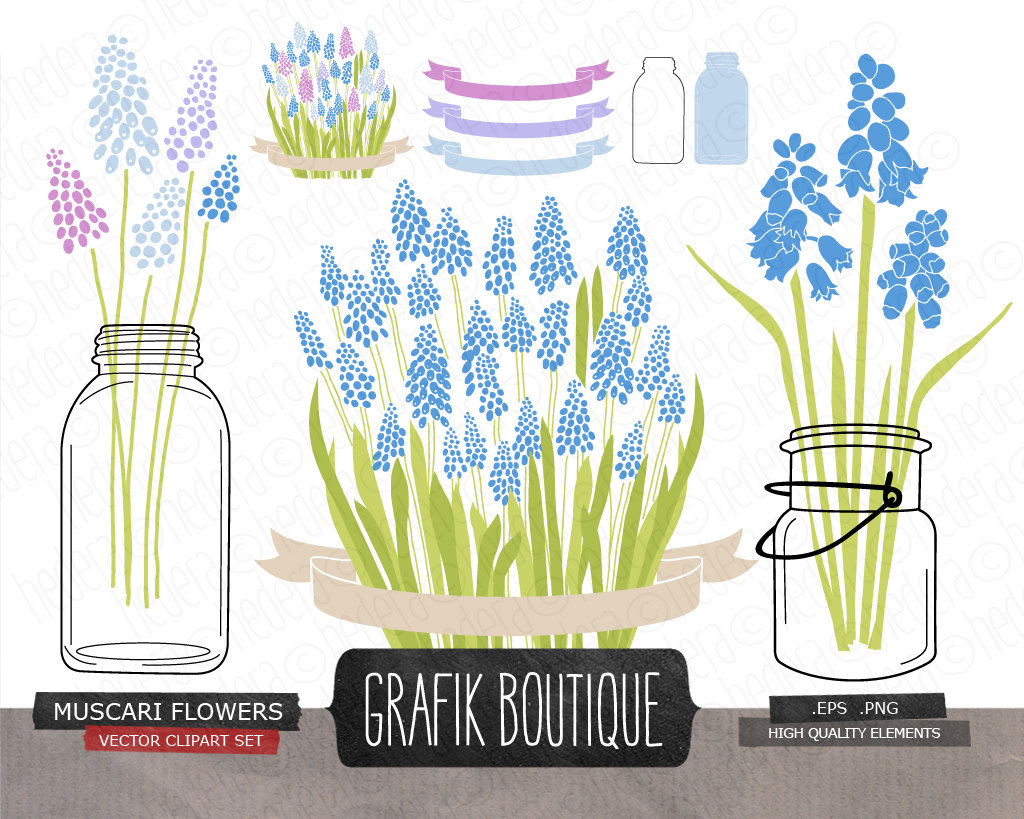 Grape Hyacinth clipart #6, Download drawings