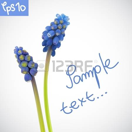 Grape Hyacinth clipart #4, Download drawings