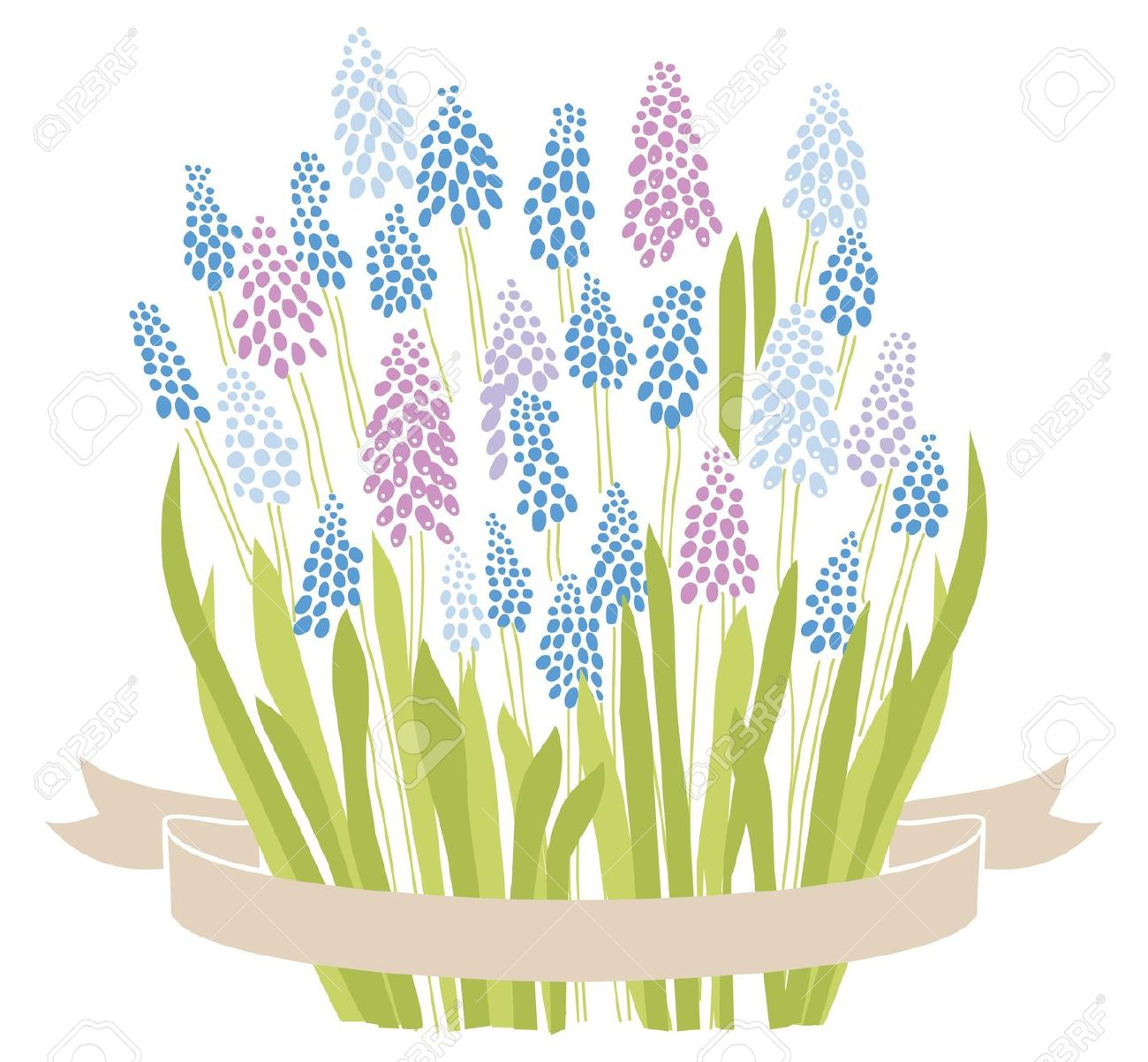 Grape Hyacinth clipart #16, Download drawings