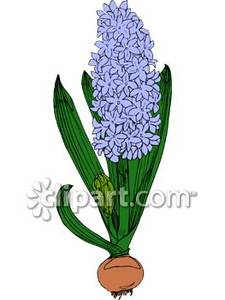 Grape Hyacinth clipart #18, Download drawings