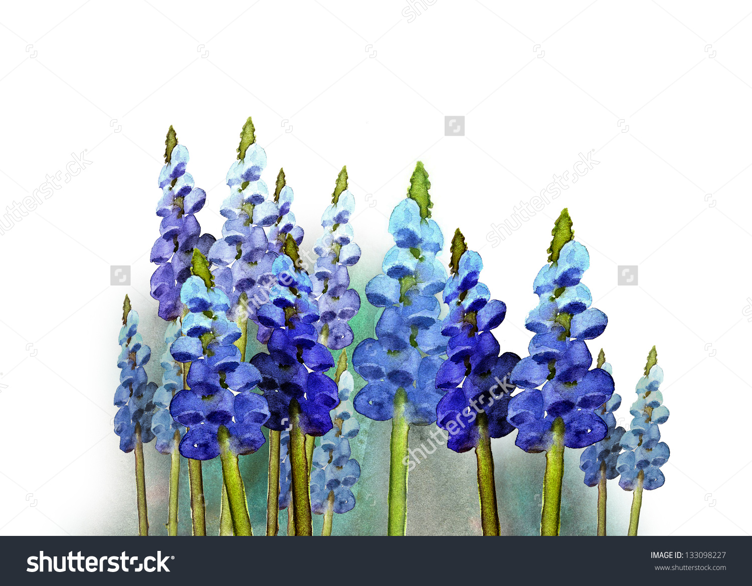 Grape Hyacinth clipart #12, Download drawings
