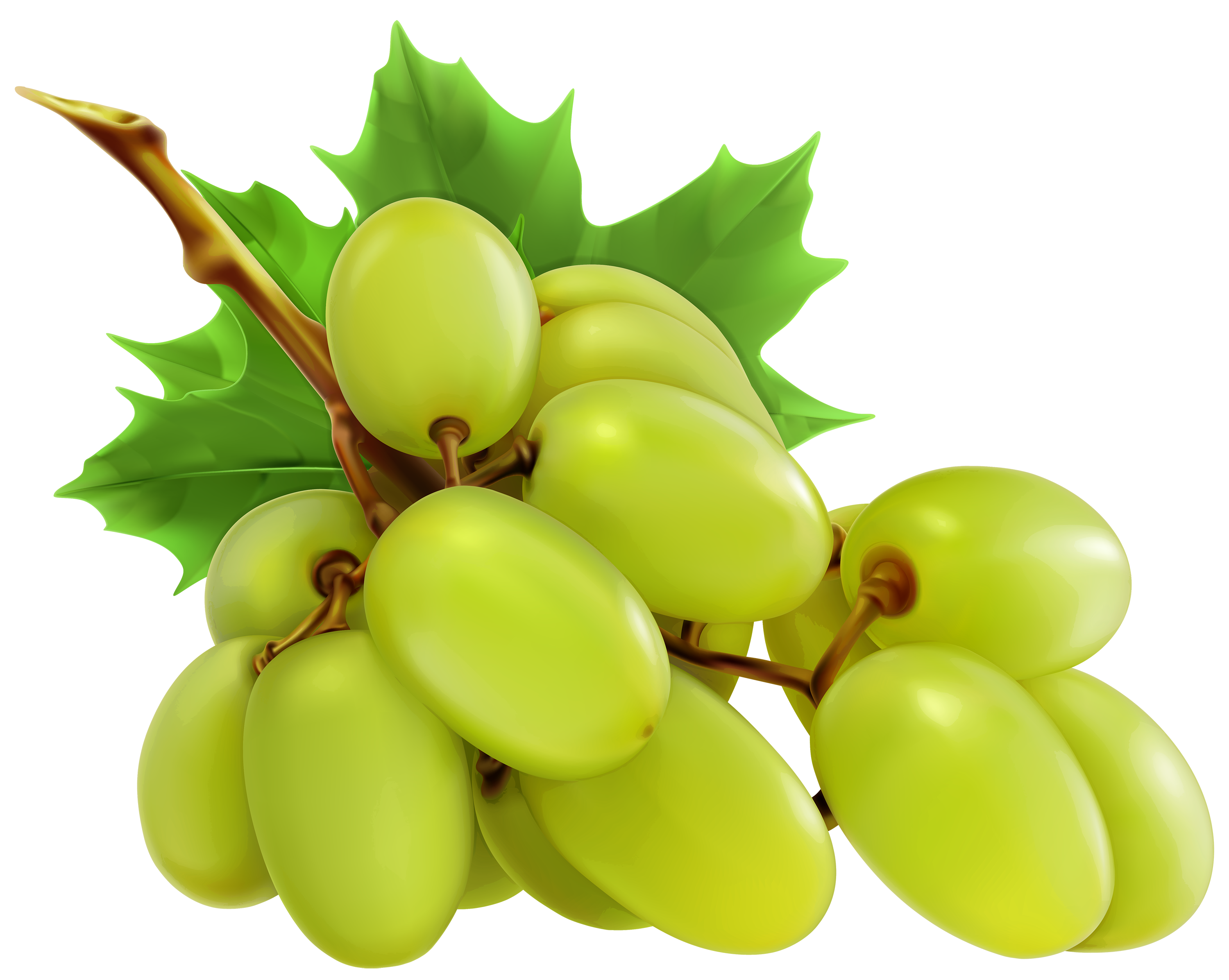 Grapes clipart #20, Download drawings