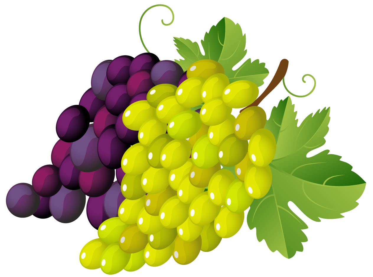 Grapes clipart #18, Download drawings