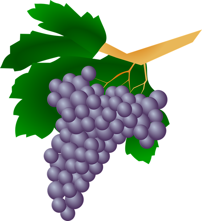 Grapes svg #12, Download drawings