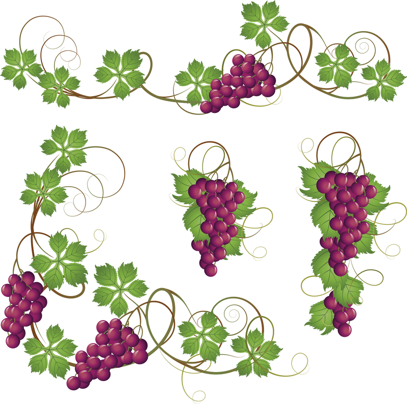 Grapes svg #11, Download drawings