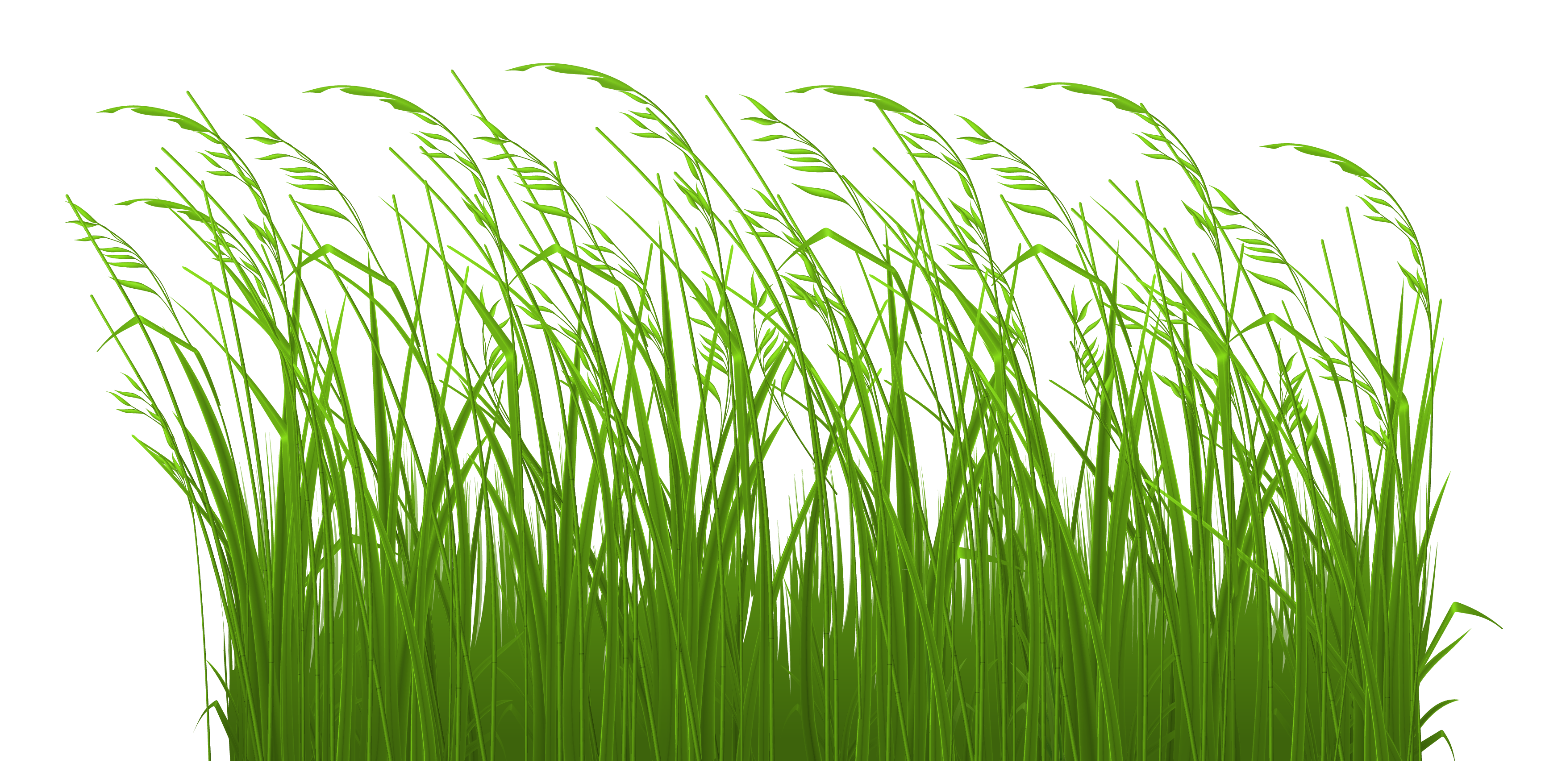 Grass clipart #5, Download drawings