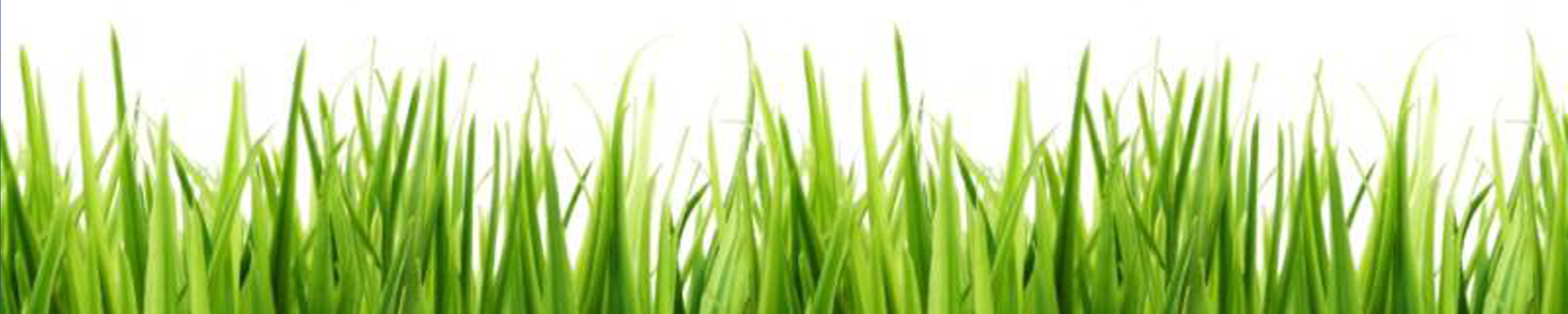 Grass clipart #12, Download drawings