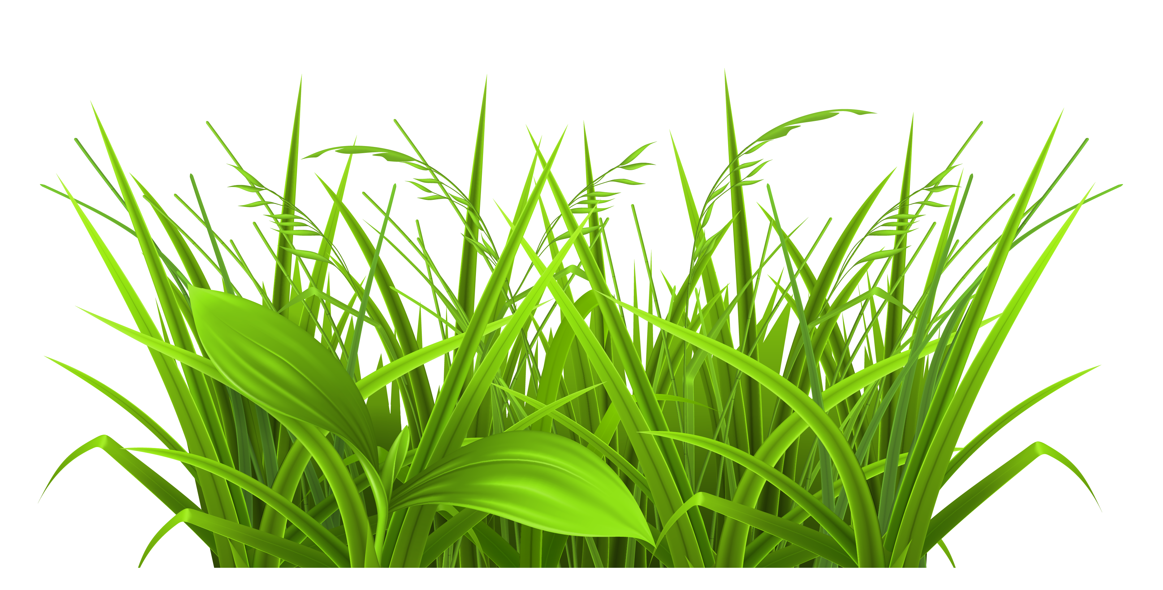 Grass clipart #15, Download drawings
