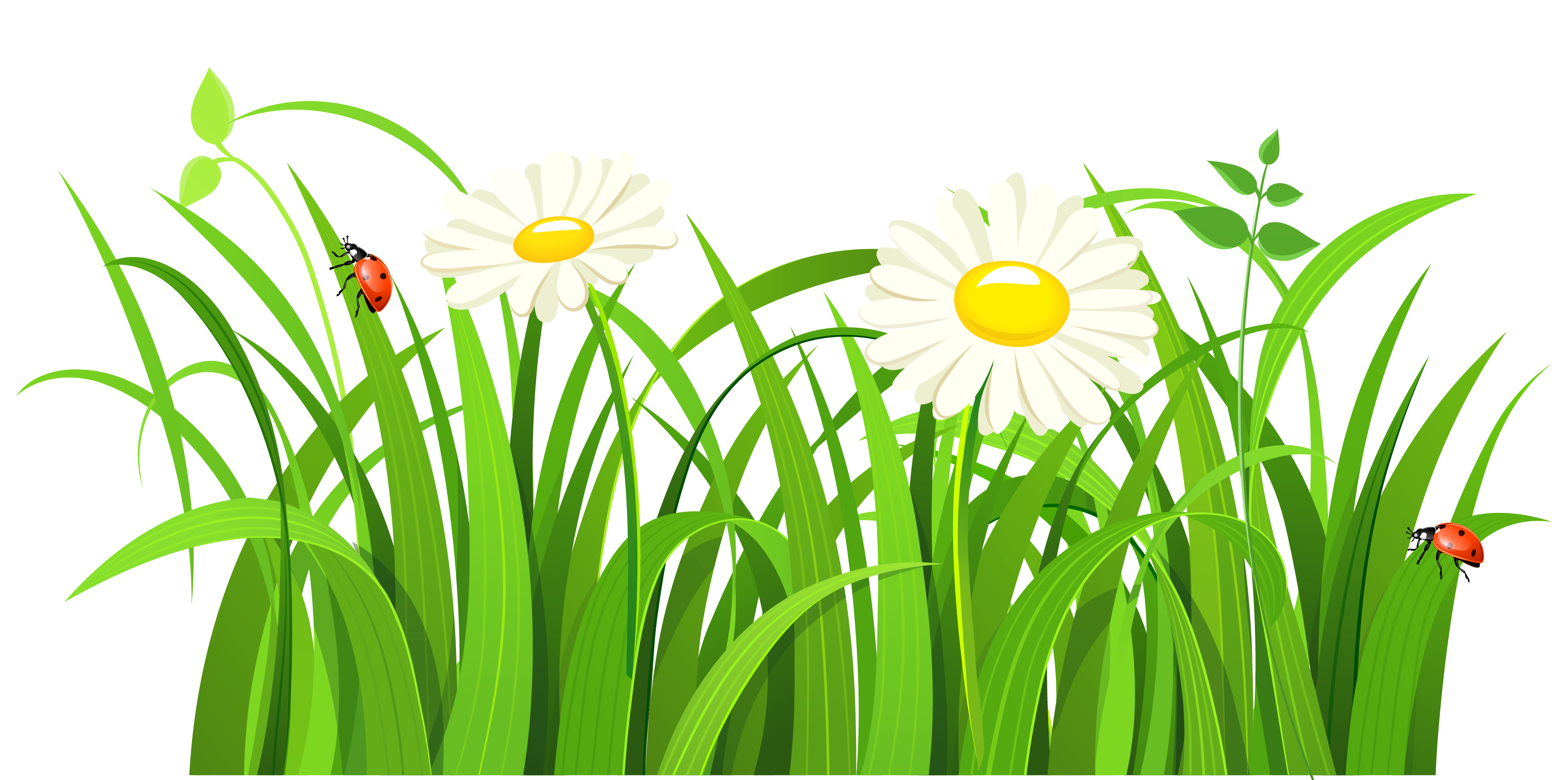 Grass clipart #3, Download drawings