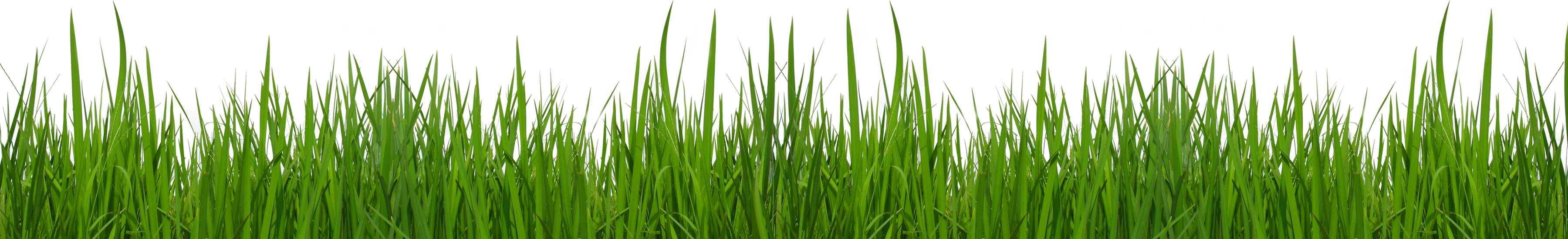 Grass clipart #4, Download drawings