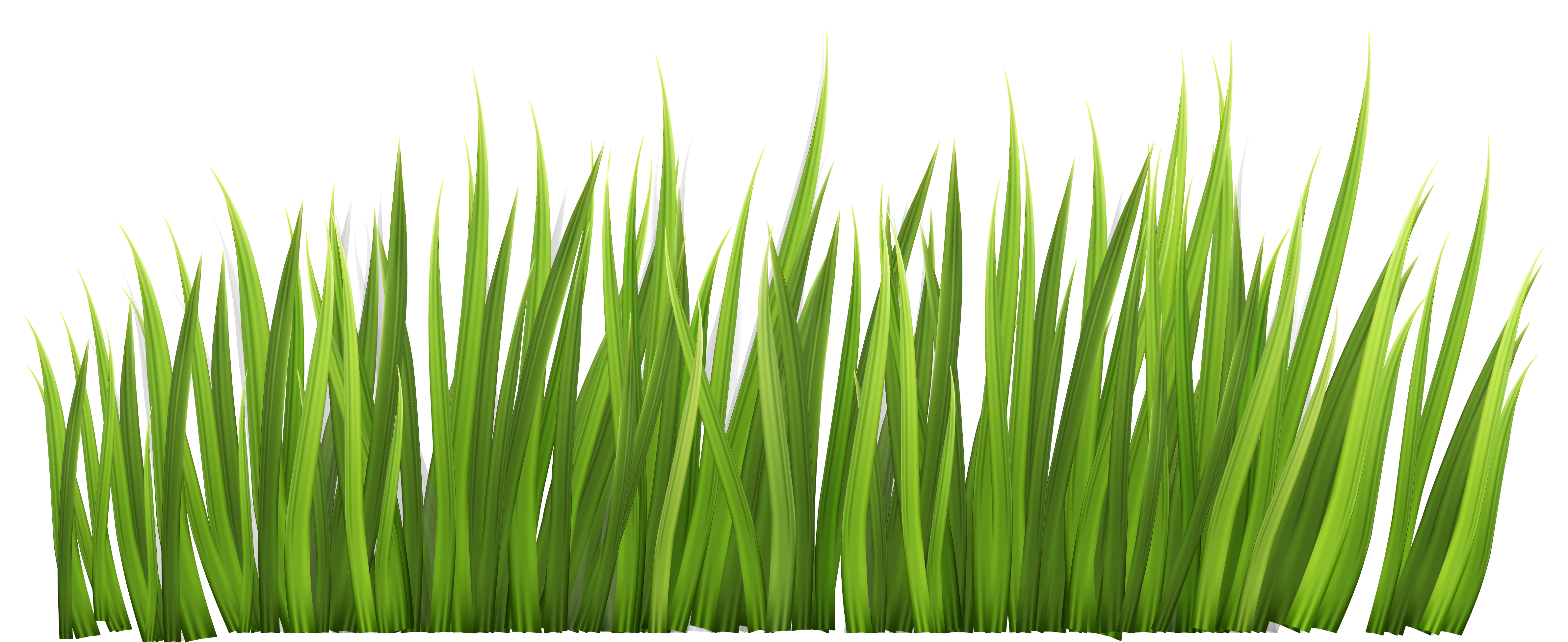 Grass clipart #14, Download drawings