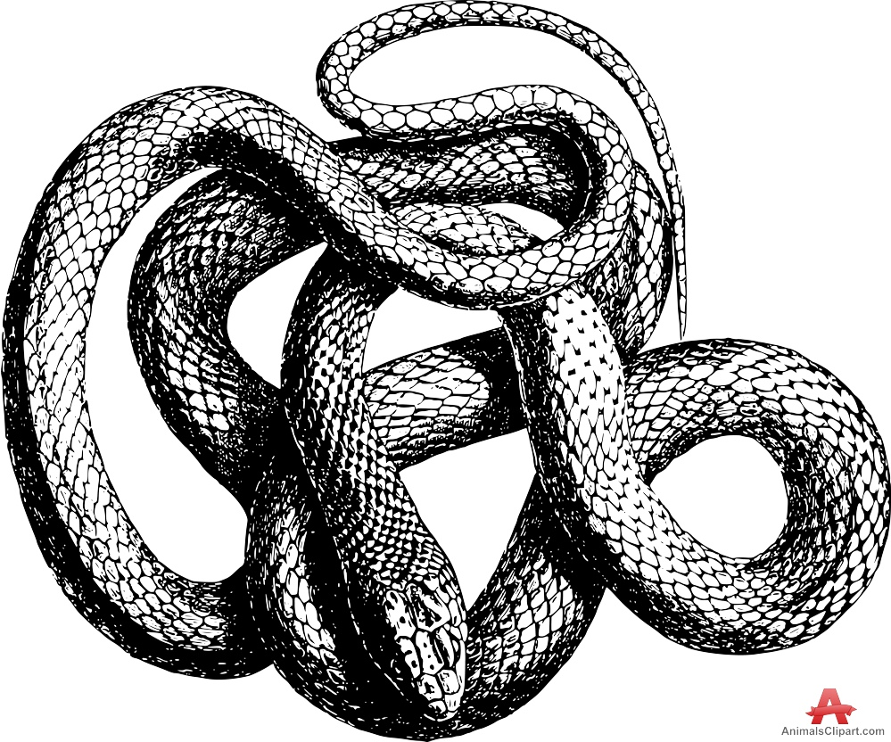 Grass Snake clipart #20, Download drawings