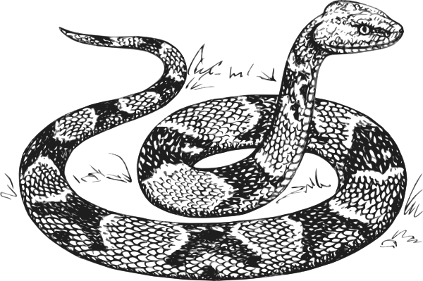 Grass Snake clipart #10, Download drawings