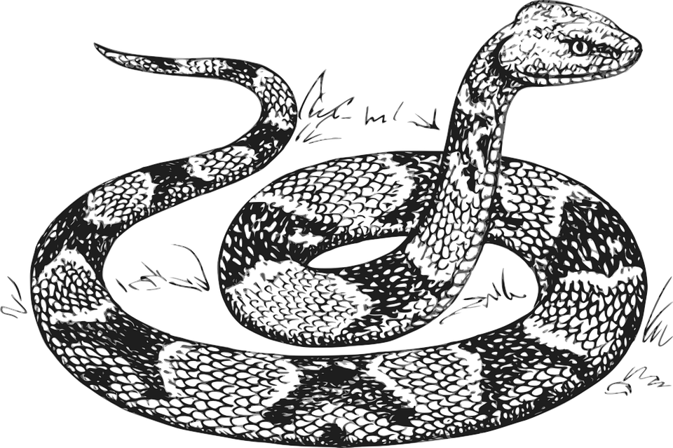 Grass Snake svg #9, Download drawings
