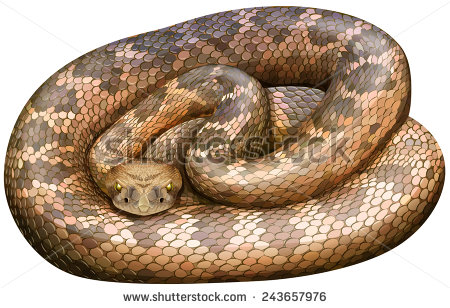 Grass Snake svg #8, Download drawings