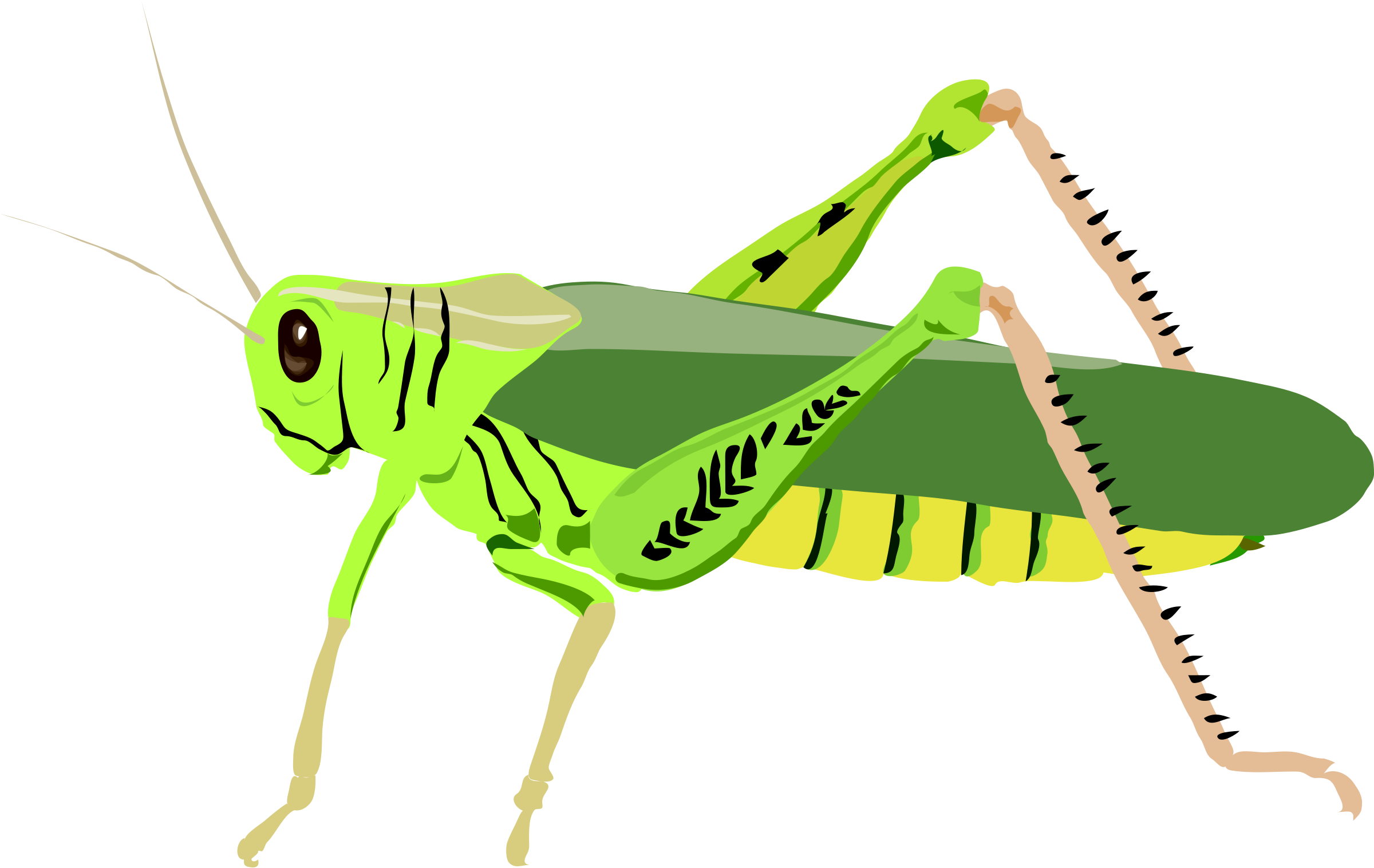 Grasshopper clipart #12, Download drawings