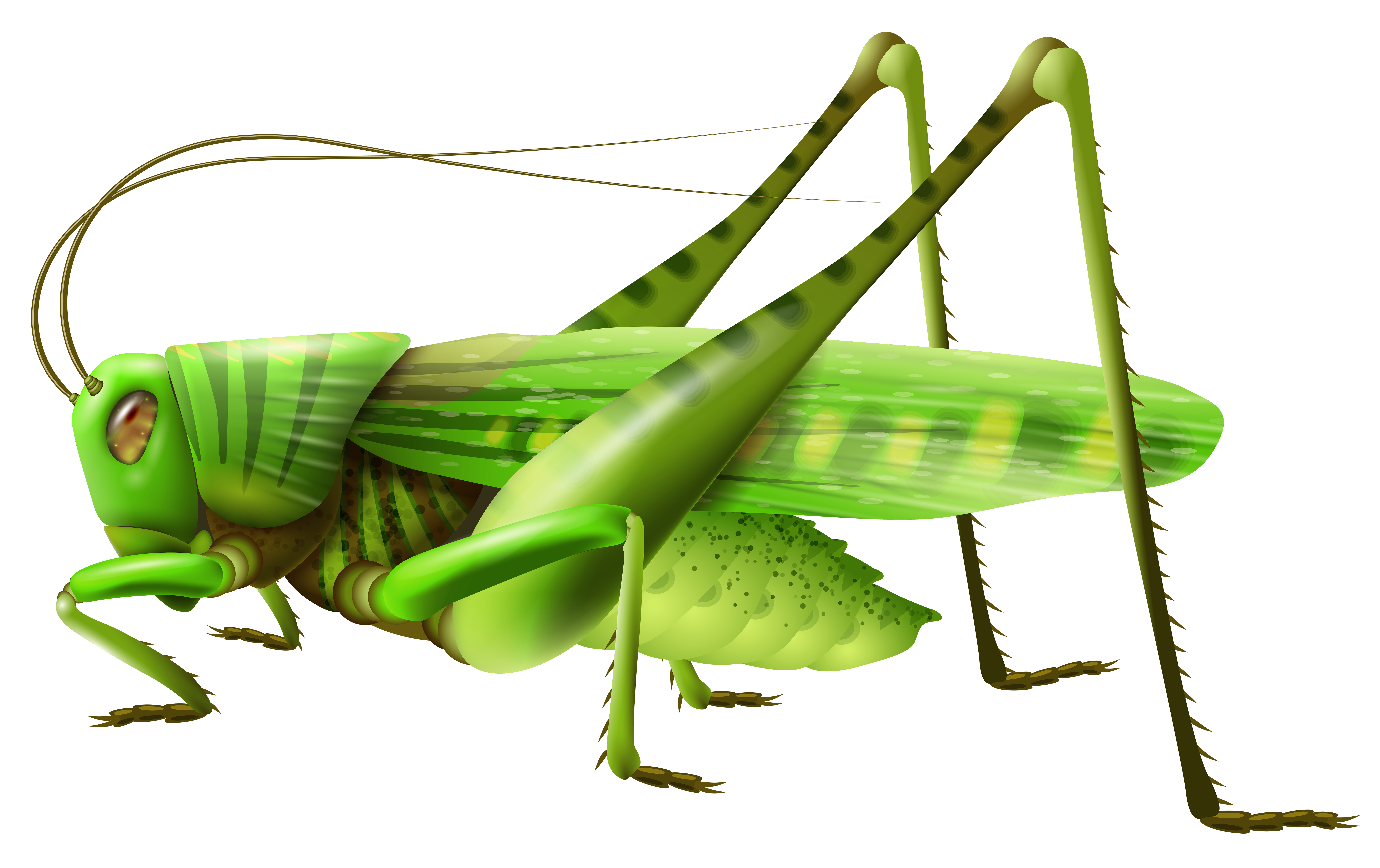 Grasshopper clipart #2, Download drawings