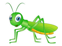 Grasshopper clipart #15, Download drawings