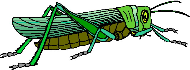 Grasshopper clipart #1, Download drawings