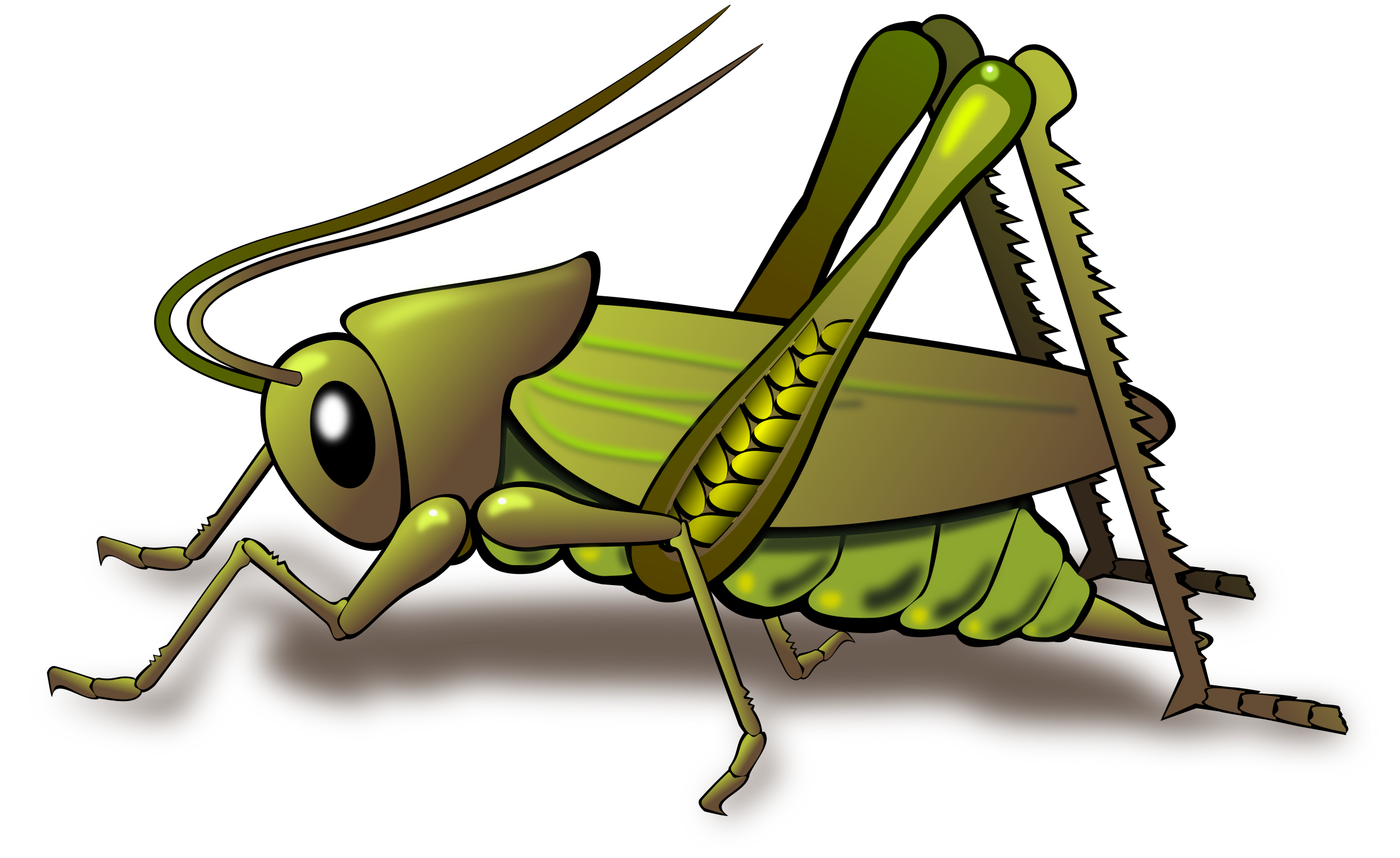 Grasshopper clipart #10, Download drawings