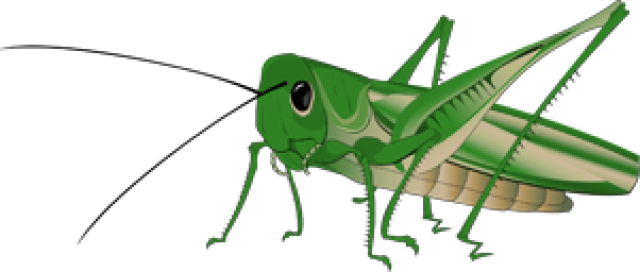 Grasshopper clipart #17, Download drawings