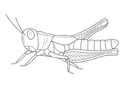 Grasshopper coloring #6, Download drawings