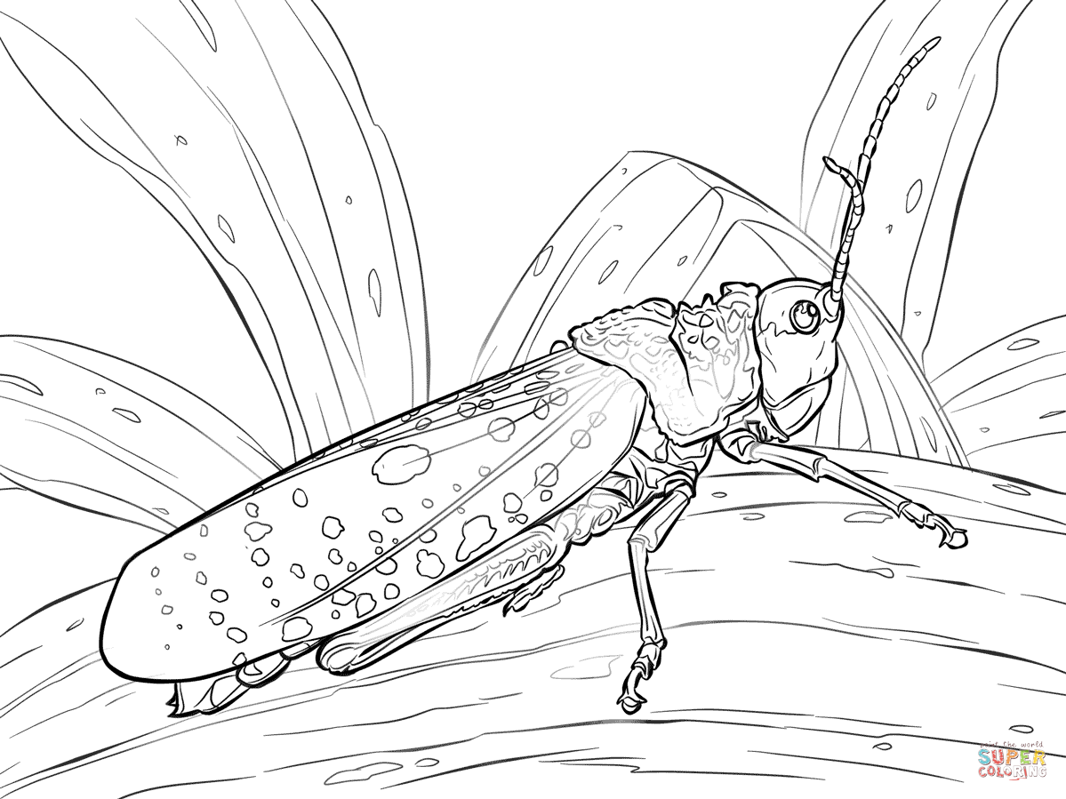 Grasshopper coloring #18, Download drawings