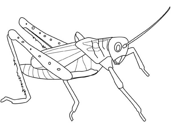 Grasshopper coloring #12, Download drawings