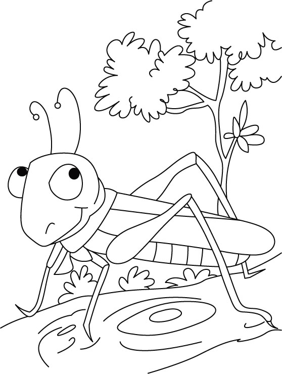 Grasshopper coloring #17, Download drawings