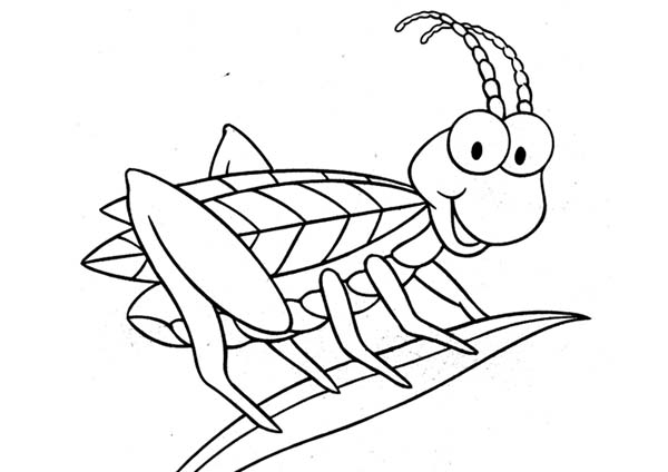 Grasshopper coloring #2, Download drawings