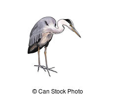 Green Heron clipart #17, Download drawings